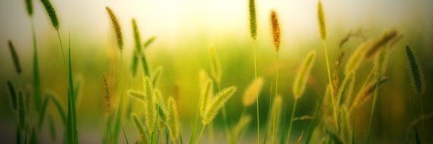 ¿Astenia primaveral? Qué es y cómo combatirla