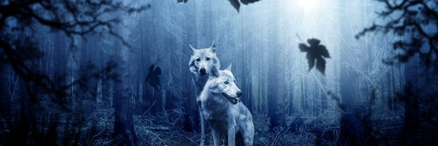 Paràbola dels dos llops